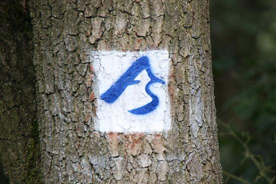 bäume tun gut